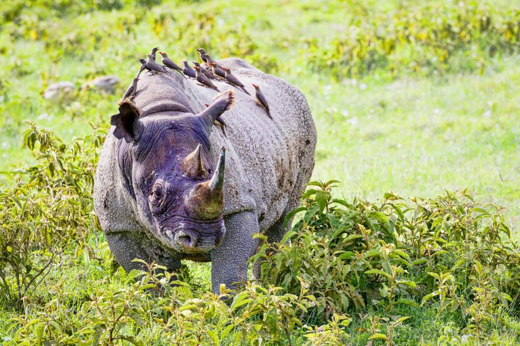 IMAGE: http://www.holzphoto.com/wp-content/uploads/2015/05/wildlife_Photographer_038.jpg