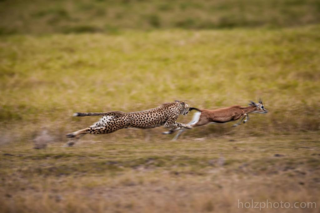 IMAGE: http://www.holzphoto.com/wp-content/uploads/2015/05/wildlife_Photographer_060.jpg