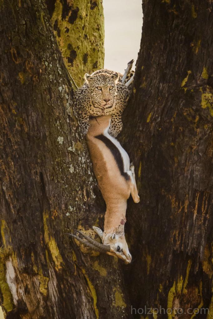 IMAGE: http://www.holzphoto.com/wp-content/uploads/2015/05/wildlife_Photographer_062.jpg
